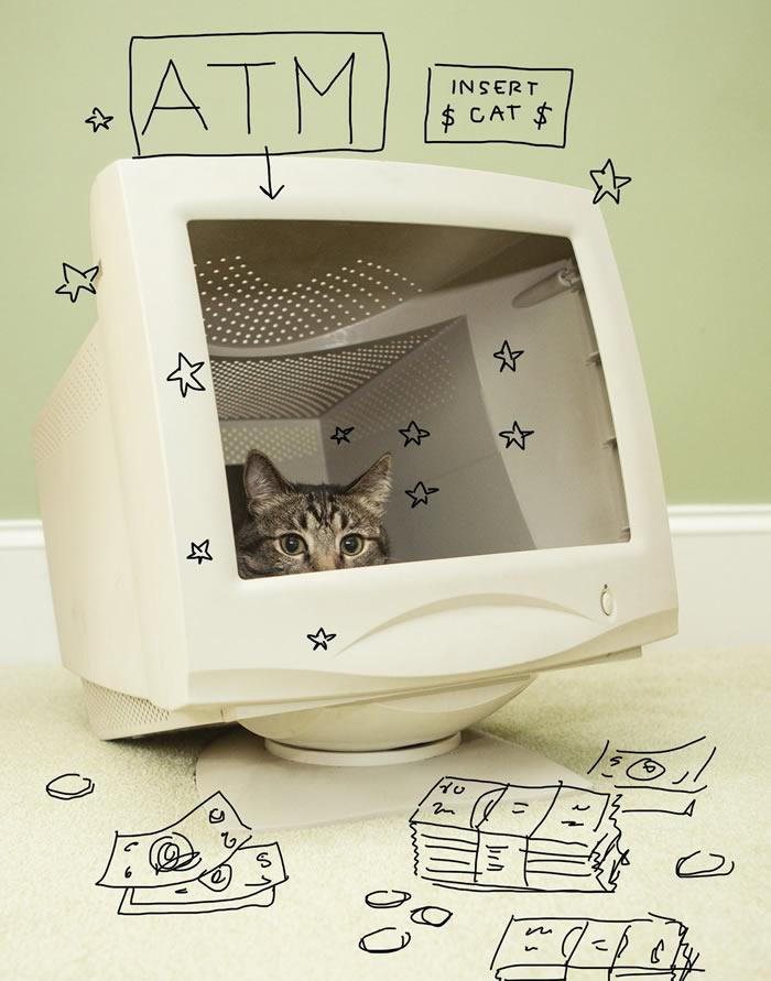 cat-celeb