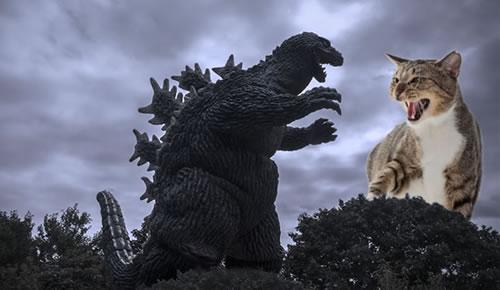 Cat-vs-Godzilla