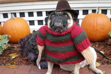 Dogs_Dressed_Like_Freddy_Krueger