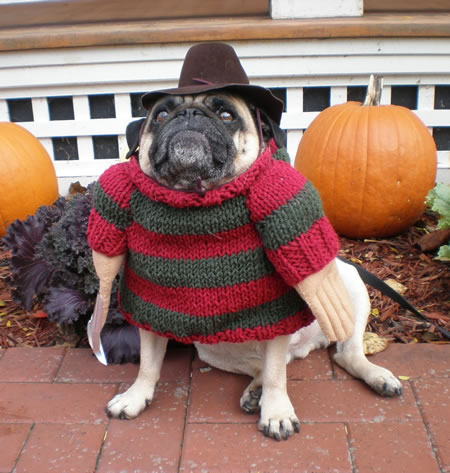 Freddy_Krueger_Dog1