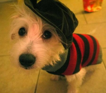 Freddy_Krueger_Dog10