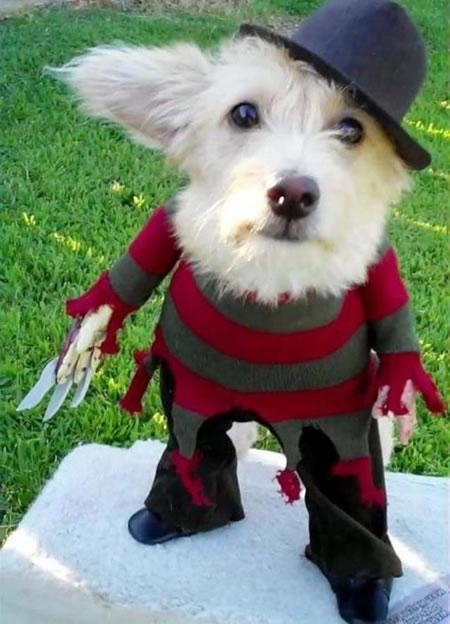 Freddy_Krueger_Dog2