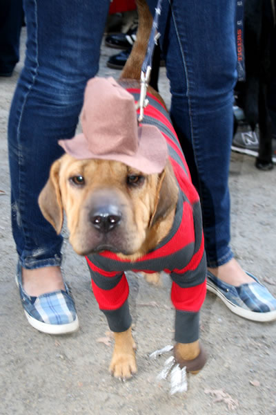 Freddy_Krueger_Dog3