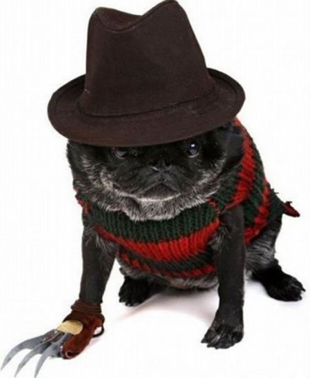 Freddy_Krueger_Dog7