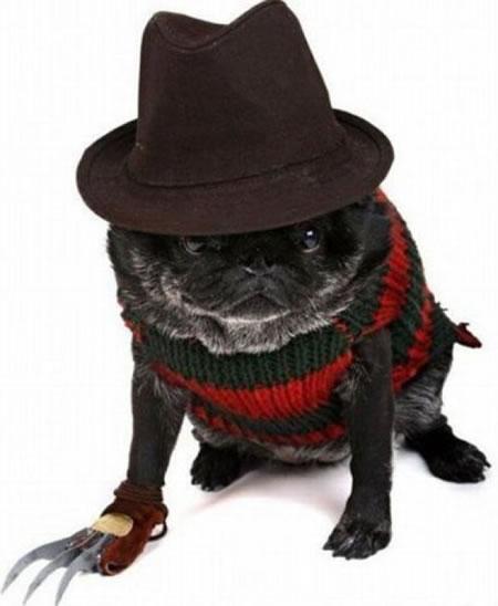 Freddy_Krueger_Dog7