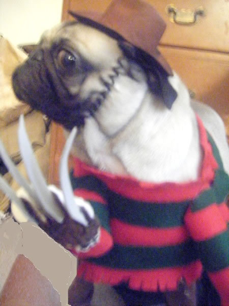 Freddy_Krueger_Dog8