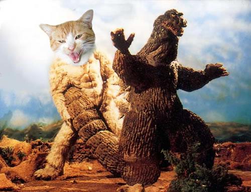 Godzilla vs.cat