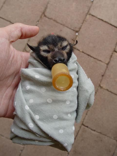 babybatblanket