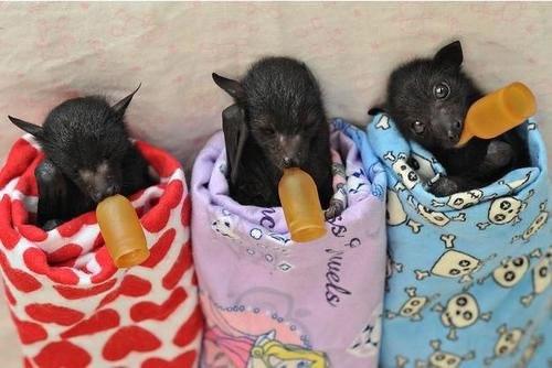 batsbottles