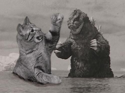 godzilla-vs-cat